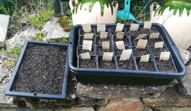 Pleins de pots avec des semis et leurs étiquettes